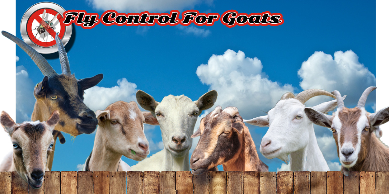 Fly Parasites Provided by Useful Farm Products